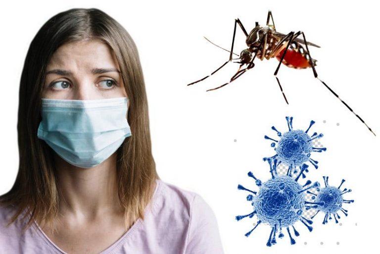 Na pandemia covid-19, outro desafio: a dengue